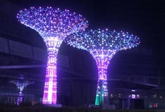 富兴半岛广场景观树